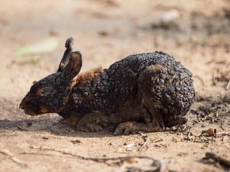 Закарпатці взялися за спалювання сухостою: Вогонь знищує тварин та родючий шар ґрунту