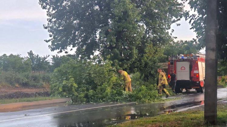 Зламані дерева в Ужгороді перекрили дороги
