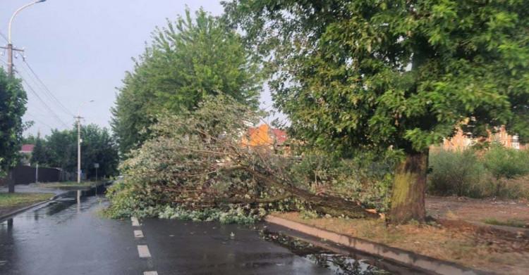 Шквали вітру ламали в Ужгороді дерева й обривали лінії електропередач