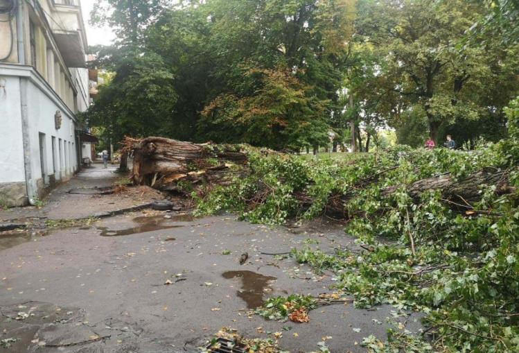 Повалене вітром дерево впало на машину